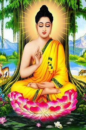 Phật Pháp Căn Bản - Phật Pháp Căn Bản