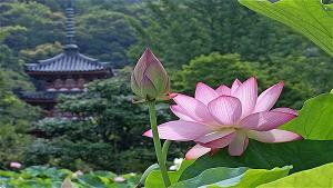 Sử Dụng Thất Giác Chi (Thất Bồ Đề Phần) Trong Công Phu Môn Niệm Phật - Tâm cảnh nhất như