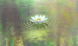 Tu học Phật pháp - Những cánh hoa rơi