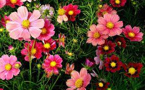 Mục đích của đạo Phật - Rác làm đẹp cho hoa