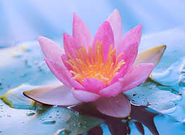 Văn học Phật giáo - Ý hướng triết lý trong phương thức hành xử của đạo Phật Việt Nam