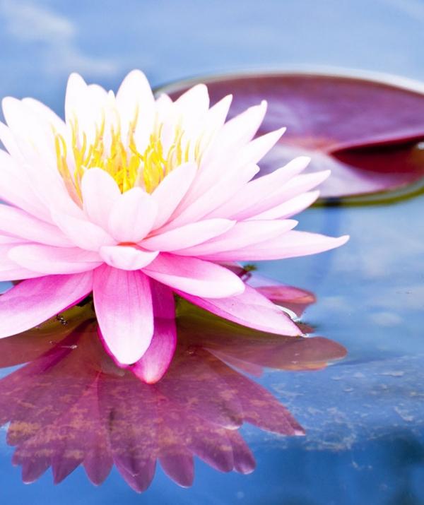 Sử Dụng Thất Giác Chi (Thất Bồ Đề Phần) Trong Công Phu Môn Niệm Phật - Thực hành năm điều đạo đức