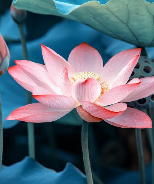 Bài viết, tiểu luận, truyện ngắn - Hương Phật