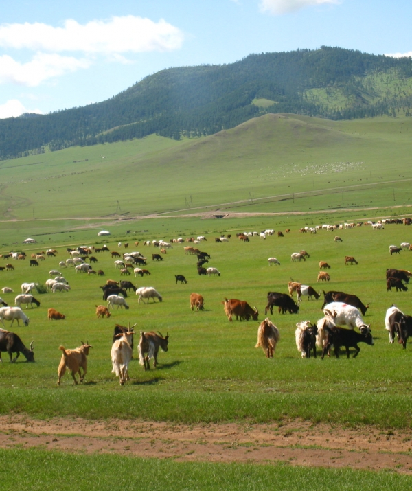 Bài viết, tiểu luận, truyện ngắn - Đuổi kịp Mông Cổ