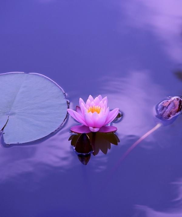 Bài viết, tiểu luận, truyện ngắn - Đức Phật dạy về việc giữ giới (Trích kinh Đại Bát Niết-bàn)