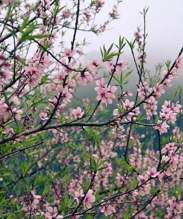 Bài viết, tiểu luận, truyện ngắn - Đọc thơ xuân Nguyễn Bính