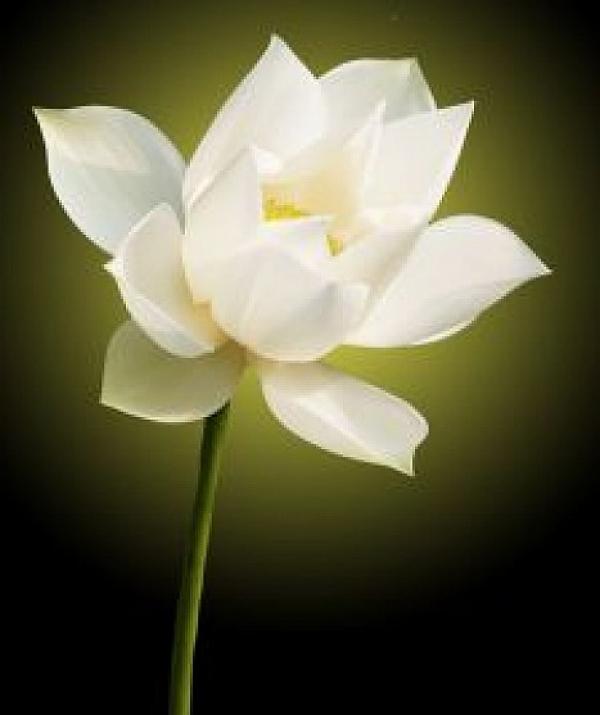 Tu học Phật pháp - Đức hạnh