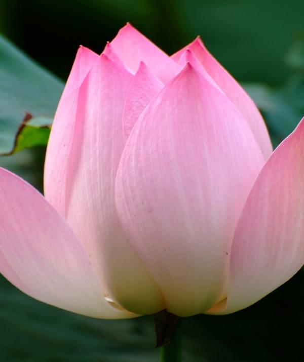 Bài viết, tiểu luận, truyện ngắn - Phật trong tôi