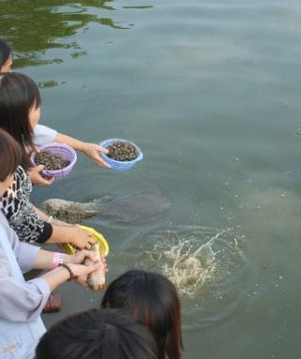 Sử Dụng Thất Giác Chi (Thất Bồ Đề Phần) Trong Công Phu Môn Niệm Phật - Phóng sinh: Yêu mến tự do và đức hiếu sinh