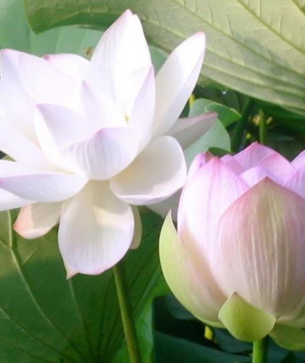 Sử Dụng Thất Giác Chi (Thất Bồ Đề Phần) Trong Công Phu Môn Niệm Phật - Đức Phật: Thấy Pháp Là Thấy Ta