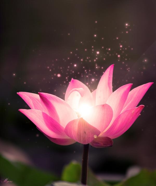 Sử Dụng Thất Giác Chi (Thất Bồ Đề Phần) Trong Công Phu Môn Niệm Phật - Thật thà niệm Phật