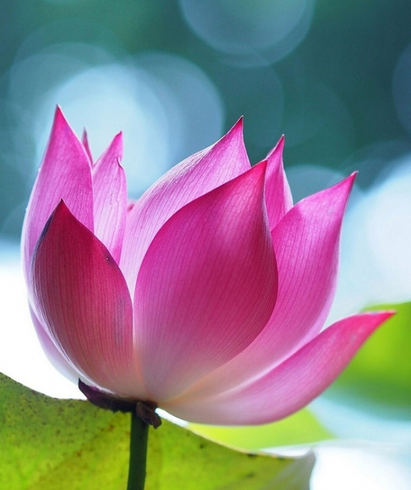 Sử Dụng Thất Giác Chi (Thất Bồ Đề Phần) Trong Công Phu Môn Niệm Phật - Mục đích tu hành trong Phật pháp là gì?