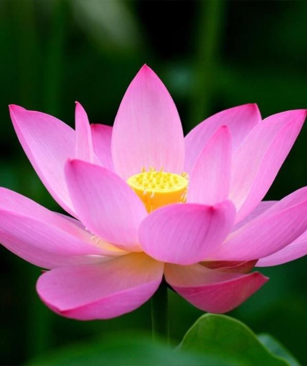 Bài viết, tiểu luận, truyện ngắn - Vâng Theo Lời Phật Dạy Giống Như Kẻ Nghèo Đặng Của Báu, Chẳng Dám Trái Phạm