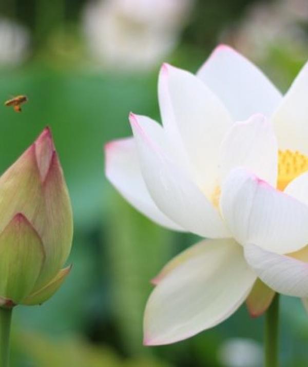 Bài viết, tiểu luận, truyện ngắn - Quả Báo Do Không Hiểu Rõ Phật Trí