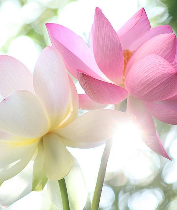 Bài viết, tiểu luận, truyện ngắn - Hết mê lầm mới thấy được Phật
