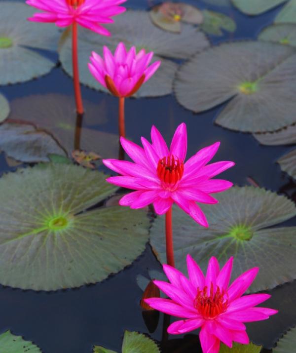 Bài viết, tiểu luận, truyện ngắn - Phương Thức Kết Hợp Những Người Con Phật
