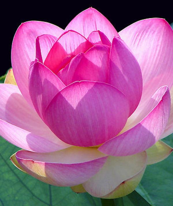Tu học Phật pháp - Phật khuyên chúng sinh phải đoạn trừ nghi hoặc