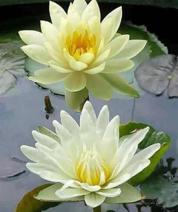 Sử Dụng Thất Giác Chi (Thất Bồ Đề Phần) Trong Công Phu Môn Niệm Phật - Lời phó chúc của Phật