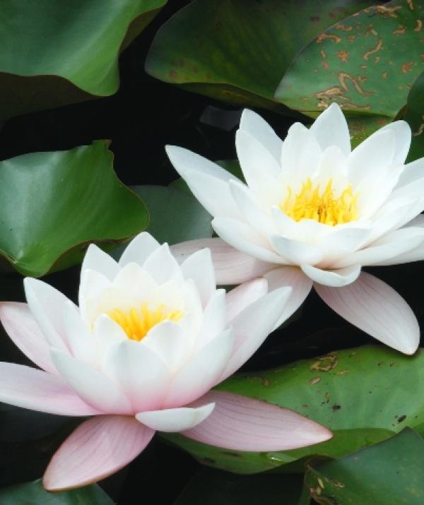 Bài viết, tiểu luận, truyện ngắn - Trung trụ Bồ Tát