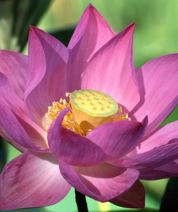 Sử Dụng Thất Giác Chi (Thất Bồ Đề Phần) Trong Công Phu Môn Niệm Phật - Thế gian tự tại