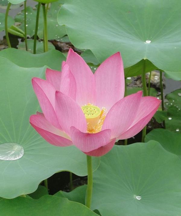 Tu học Phật pháp - Ưng vô sở trụ nhi sanh kỳ tâm...