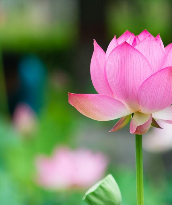 Bài viết, tiểu luận, truyện ngắn - Lợi ích chân thật đối với sự hộ trì của chư Phật