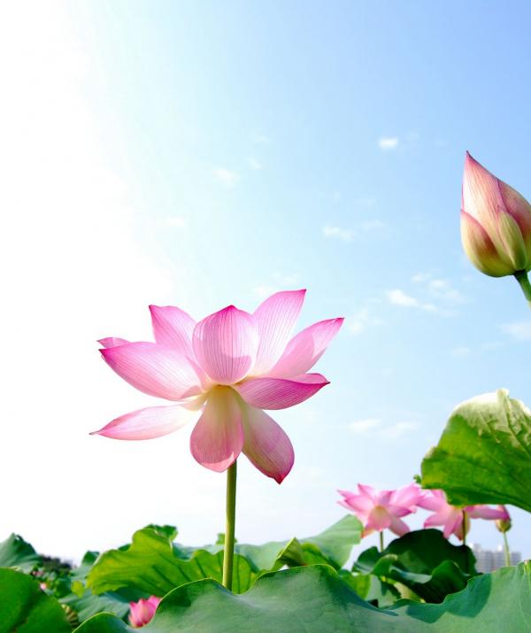 Bài viết, tiểu luận, truyện ngắn - Phật tử và Kinh điển