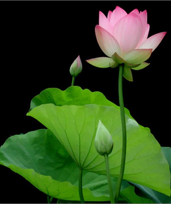 Bài viết, tiểu luận, truyện ngắn - Học Phật là sự hưởng thụ của đời người