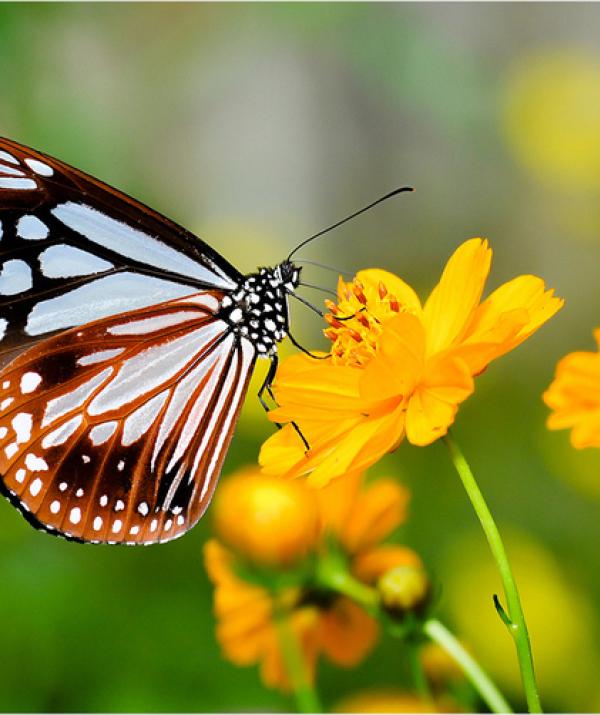 Bài viết, tiểu luận, truyện ngắn - Tình bướm