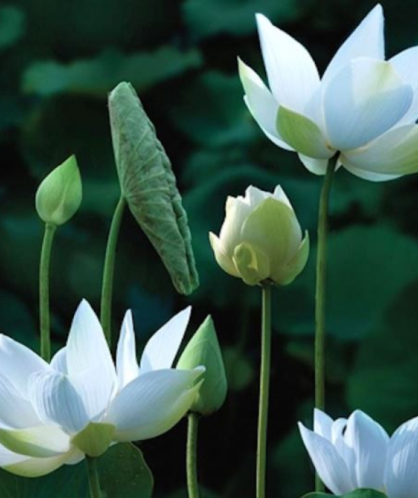 Bài viết, tiểu luận, truyện ngắn - Pháp khí của người học Phật