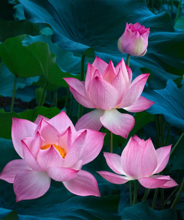 Văn học Phật giáo - Giữ mình đoan chánh