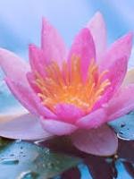 Ý hướng triết lý trong phương thức hành xử của đạo Phật Việt Nam