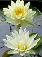 Lời phó chúc của Phật