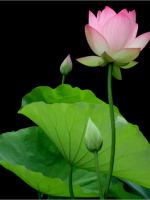 Học Phật là sự hưởng thụ của đời người