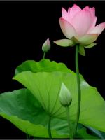 200 Năm Nguyễn Du Qua Đời, Đọc 'Phân Kinh Thạch Đài'