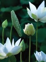 Pháp khí của người học Phật