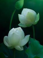 Phật pháp thâm sâu, nghĩa nhiệm mầu