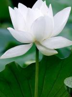 Ấm ma và Thiền định